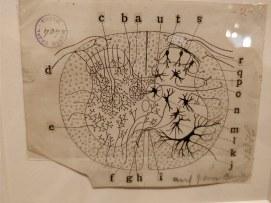 Cajal exhibition
